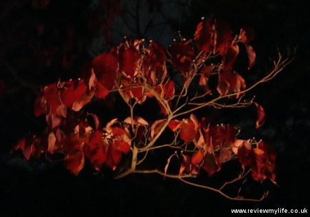 ritsurin gardens takamatsu at night 03