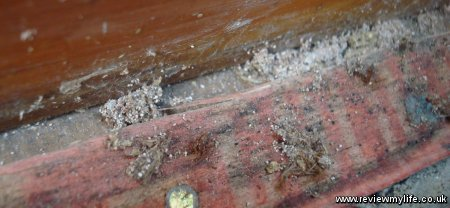 clothes moths eggs under carpet
